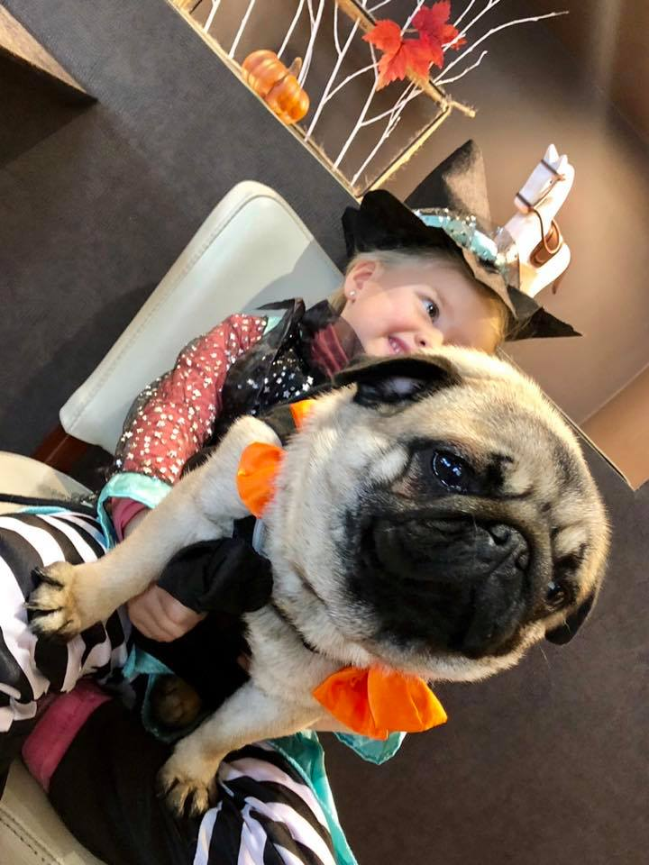 Photo d'un Horrible #Halloween #pug #pugslife #Halloween2018