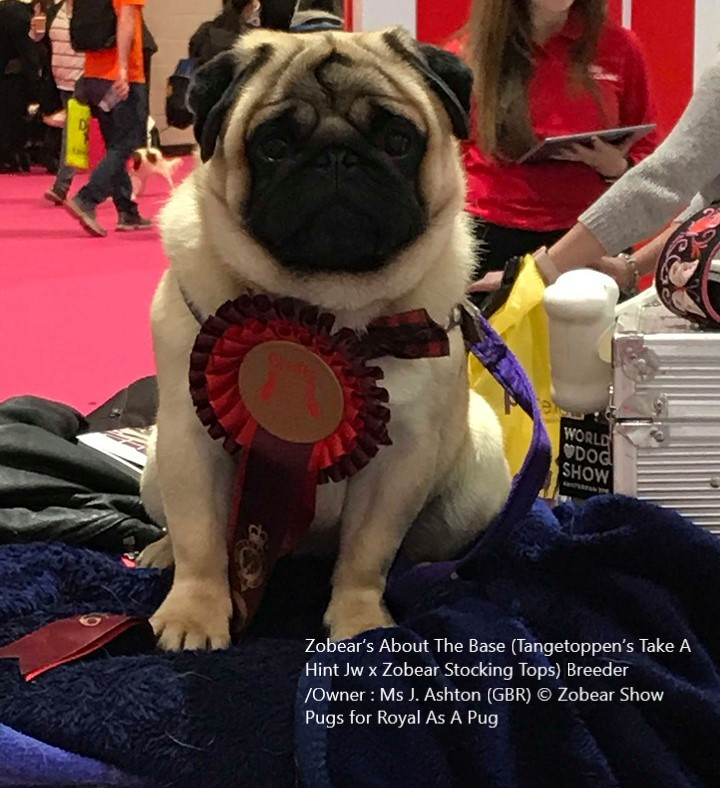 Ch Zobear's About The Base © Breed/Own: Ms J Ashton Zobear's Show Pugs for Royal As A Pug